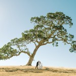 Oak tree at Santa Margarita Ranch Wedding