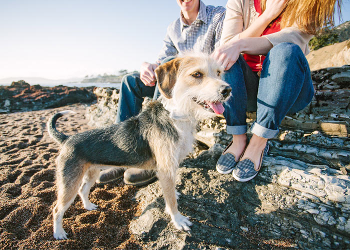 dog and engagement photos at shell beach