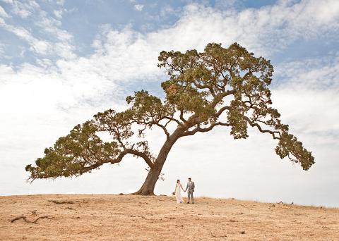 under the oak-santa margarita ranch